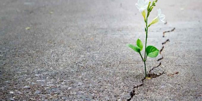 التفاؤل والأمل في السيرة النبوية